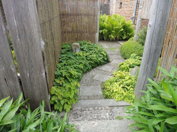 Immergrüne Bodendecker | Garten-Haus | Ziergarten