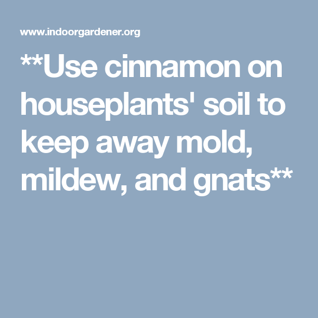 How To Get Rid Of Mold In Houseplant Soil Smart Garden Guide House Plant Care House Plants Plants