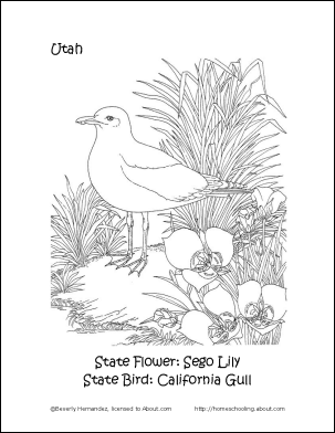 California Utah Printables State Bird And Flower Coloring Page