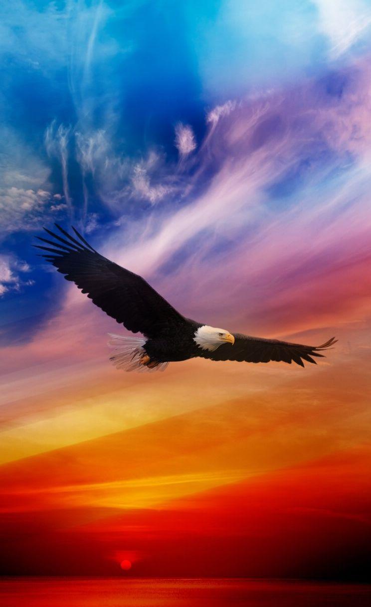 Flying Eagle Iphone 4s Parallax Wallpaper Ilikewallpaper Com Jpg
