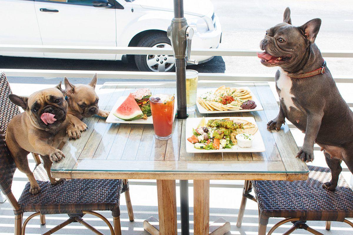 Dog Friendly Restaurants Near Me Http Pets Ok Com Dog Friendly Restaurants Near Me Dogs 2503 Html
