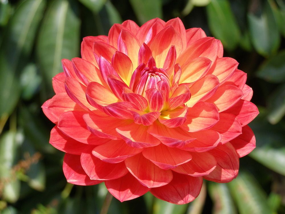 6 Gorgeous Easy Care Flowers To Replace Your Roses Beautiful