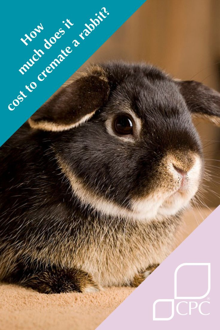 How much does a rabbit cremation or small animal cremation