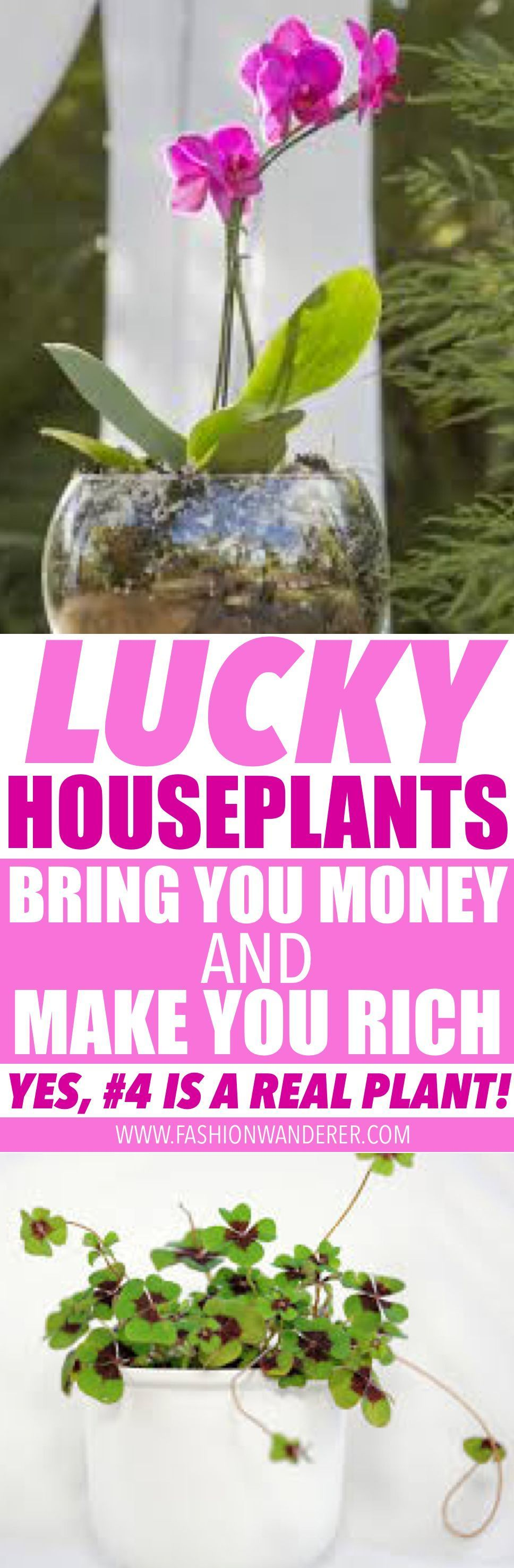 Love These Indoor Houseplants Make Your Rich I Didnt Know