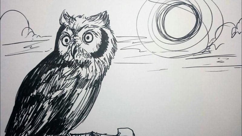 Pin Oleh Thelightfurry Di Animation And Cartoon Gambar Burung Gambar Burung