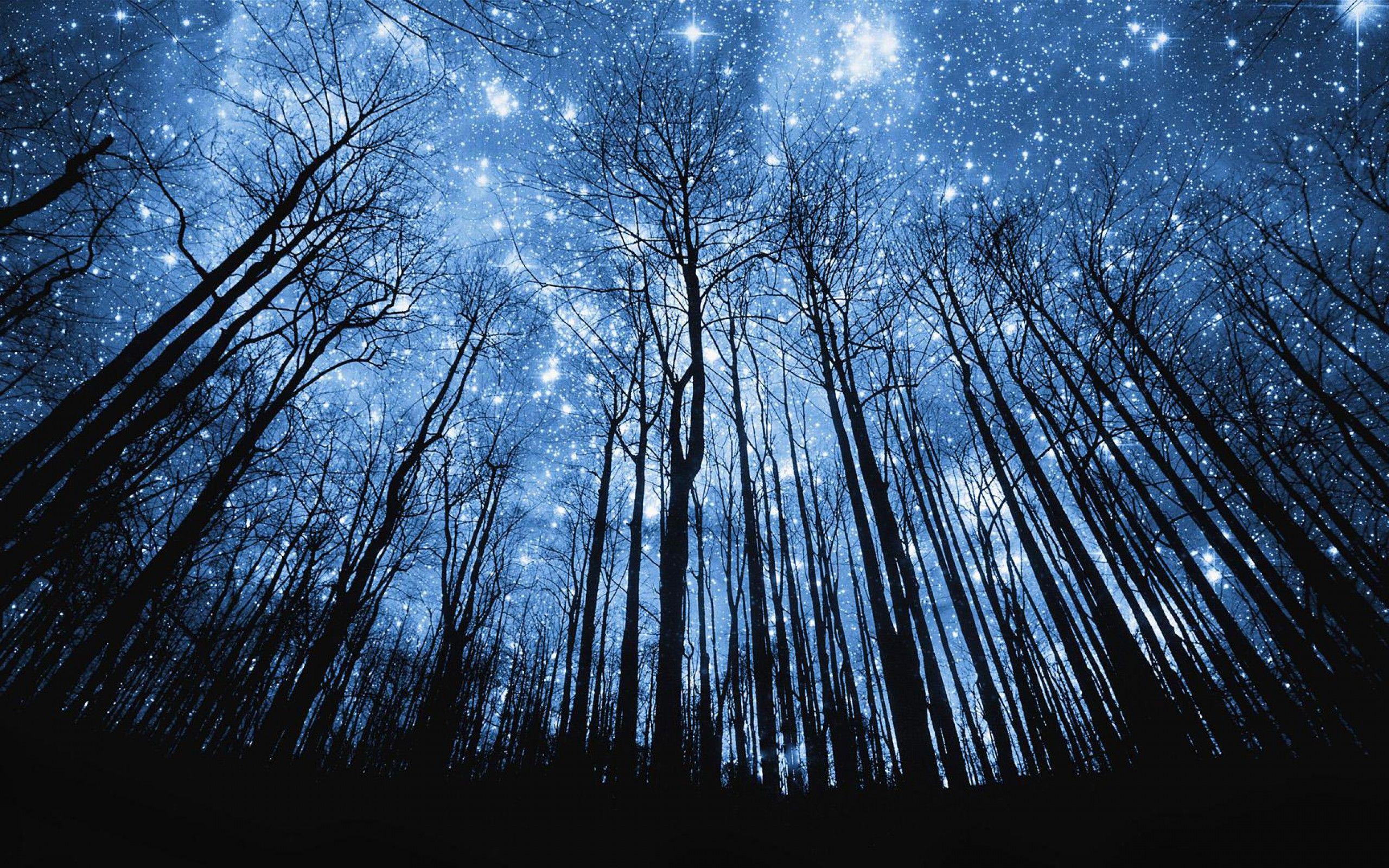 Night Sky Wallpaper Starry Night Wallpaper Starry Night Sky Cactus trees night starry sky wallpaper