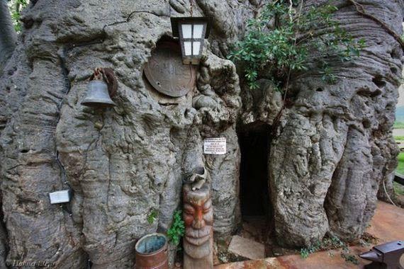 Bar em um gigantesco Baobá