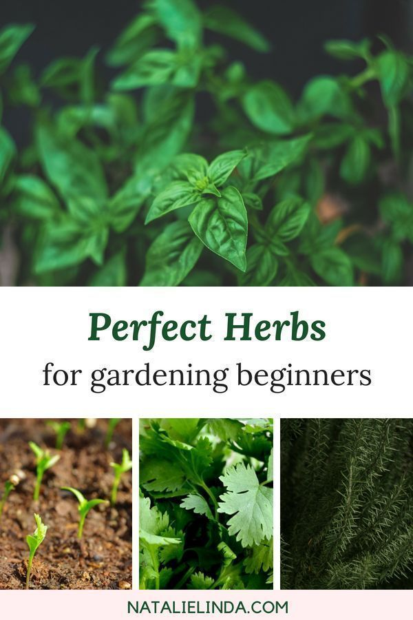 10 Herbs That Are Super Easy To Grow - Natalie Linda