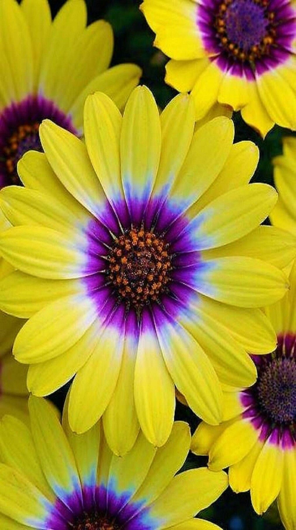 Pin By Frida Bibi On Hermosas Flores Beautiful Flowers Pinterest