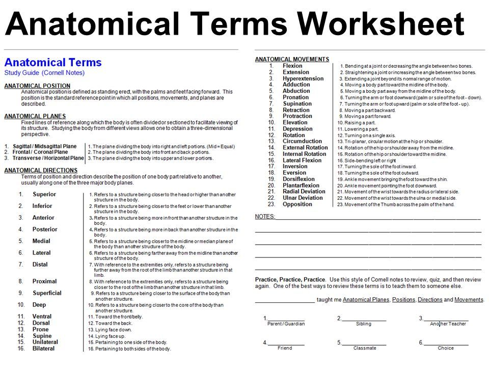Directional Terms Worksheet Anatomy Physiology Answers