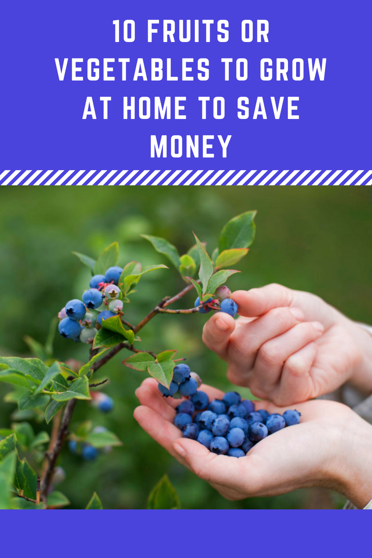 10 Fruits Or Vegetables To Grow At Home To Save Money Fruits