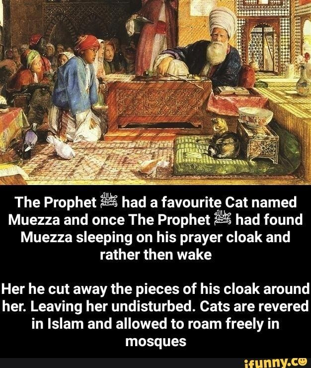 Cats In Islam Quotes in 2020 Islam, Cat names, Islamic