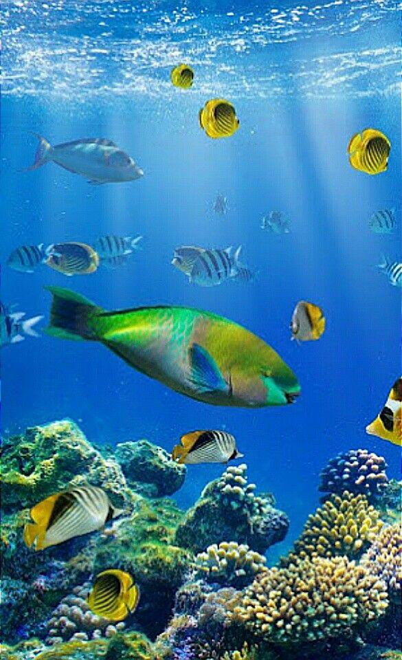 Pin By Carla Leblanc On Under Tha C Underwater Sea Sea Creatures Sea Animals