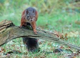 Afbeeldingsresultaat voor 2 eekhoorns