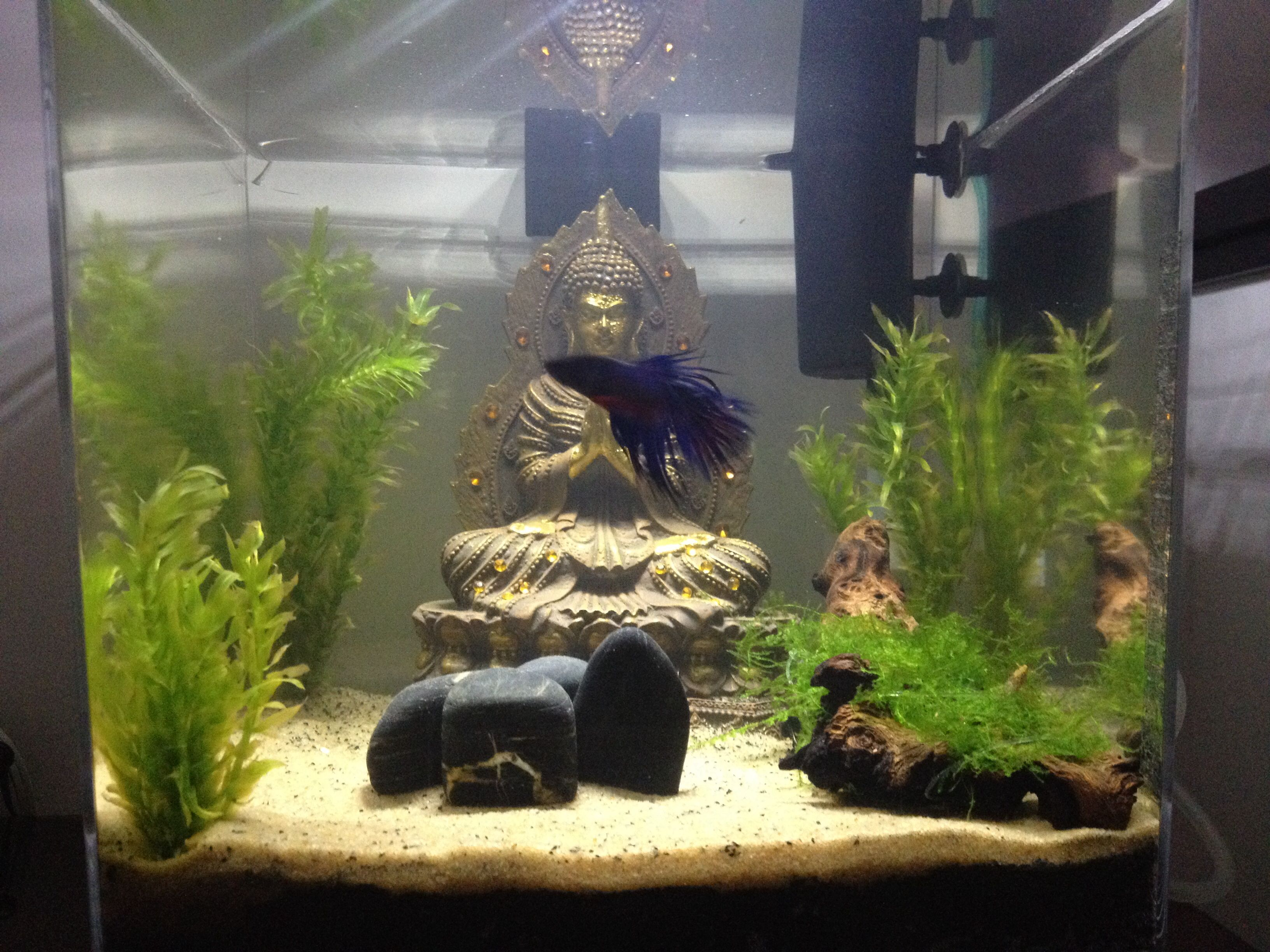 Kimotion75 uploaded this image to Betta See the album on