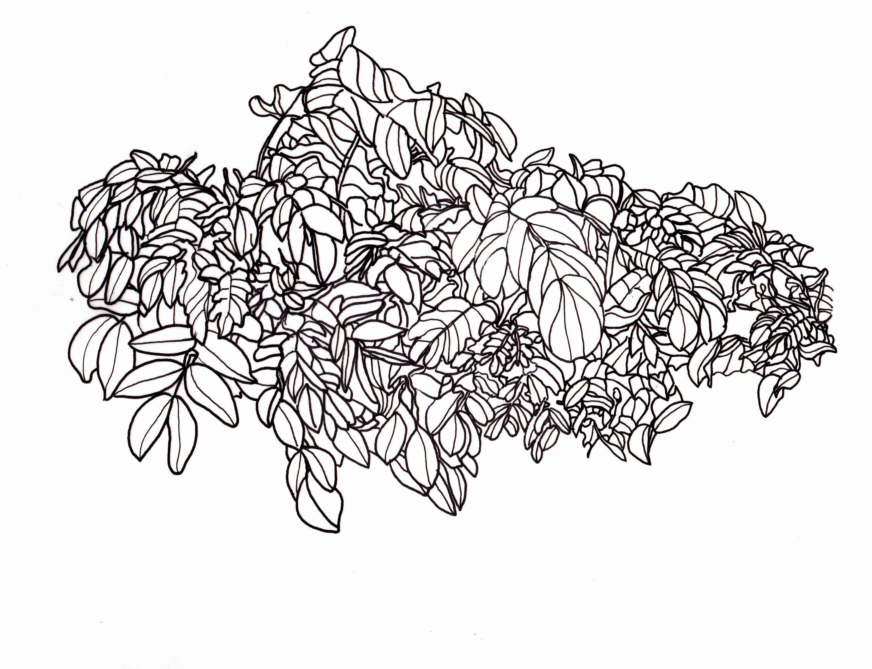 Line drawing leaves leafy bush