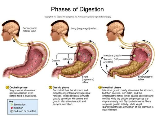 Digestion Flashcards - Questions and Answers   Quizlet ...