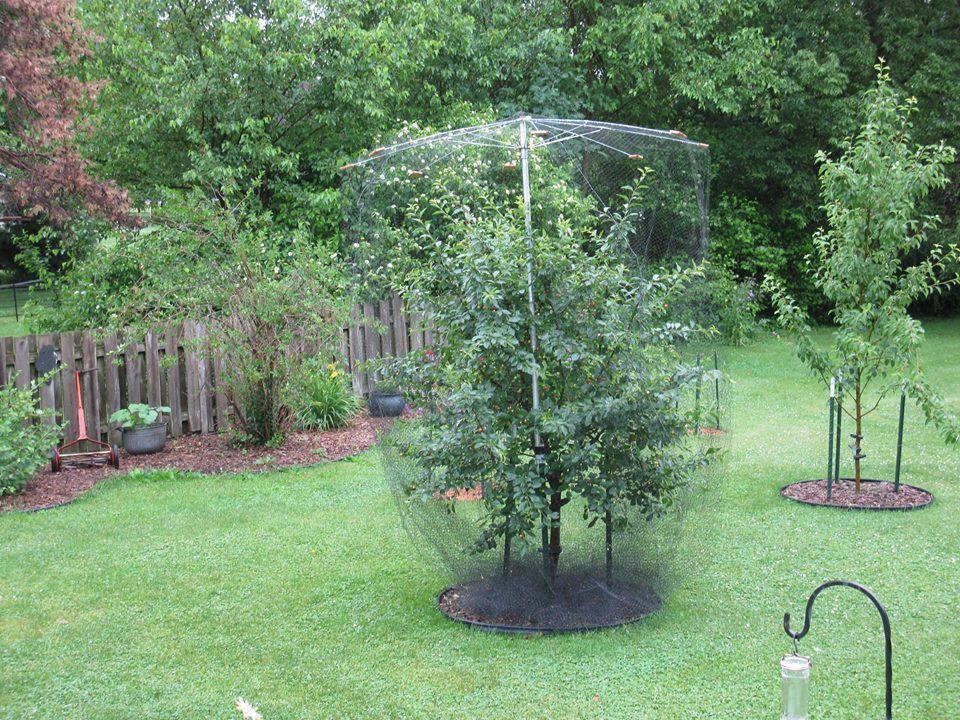 bird netting Fruit trees, Veggie garden, Dwarf fruit trees