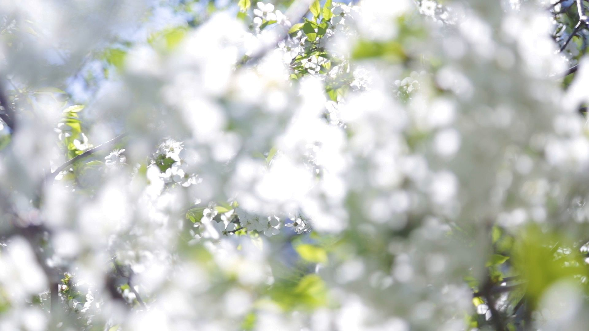 Beautiful Abstract Spring Nature Background Stock Footage Spring Abstract Beautiful Nature Nature Backgrounds Spring Nature Nature