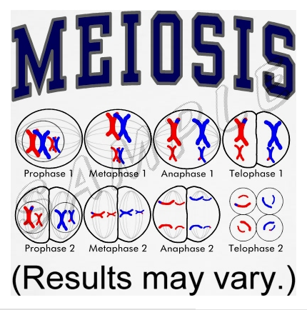 teacher teaches mitosis and meiosis using jelly snakes forever ...