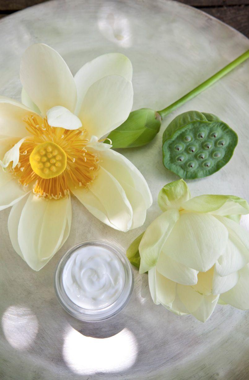 Lotus Flower Face Cream