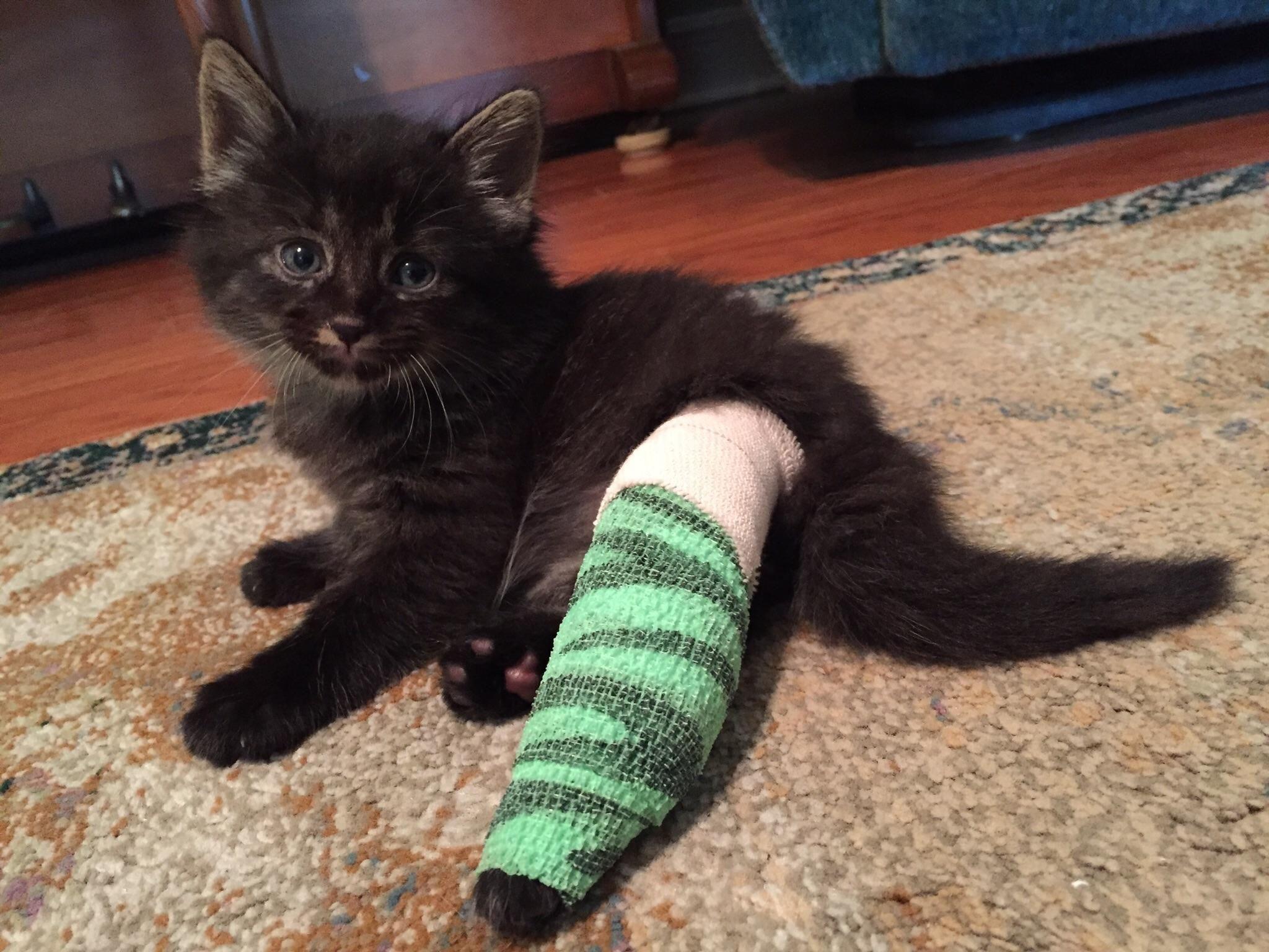 Nox Broke His Leg At 4 Weeks Of Age The Emergency Vet Used A