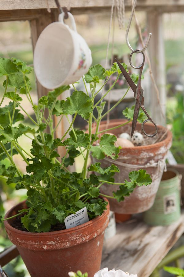 Terracotta pots...