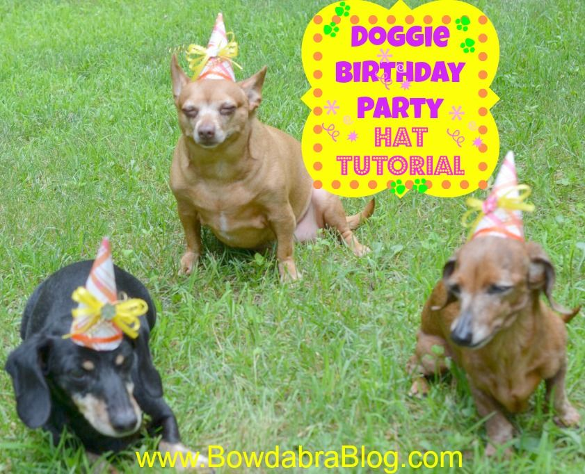 Pet Birthday Hats Tutorial Dog Birthdayparty I Am So Tired But Feel Like Im A Bad Doggie Mama If Dont Make Them