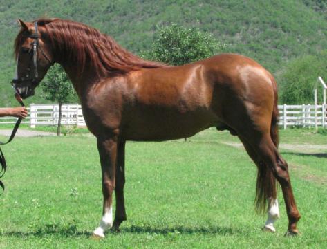Pin de Audrey carlson en Horses | Pinterest | Azteca, Caballos y ...