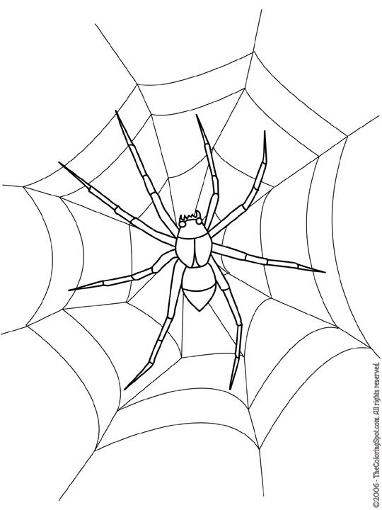 Spider Jpg 540 720 Pixels Spider Coloring Page Scary Drawings Insect Coloring Pages