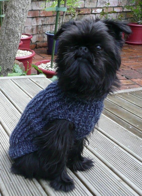 Affenpinscher Black Pug Blue Merle Pomeranian Blue English Bulldog