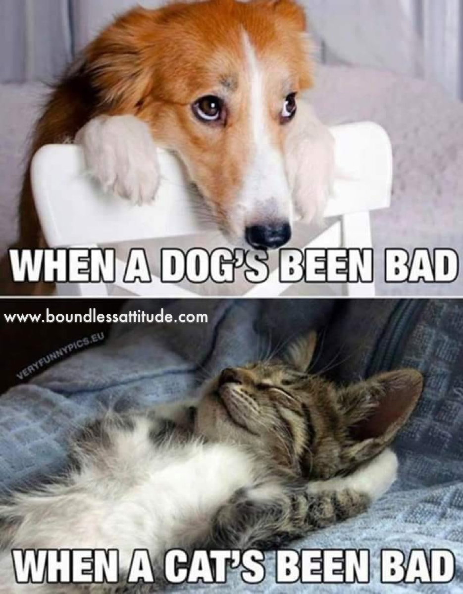 Who S Been Bad Funny Animals Cat Quotes Funny Cat Memes