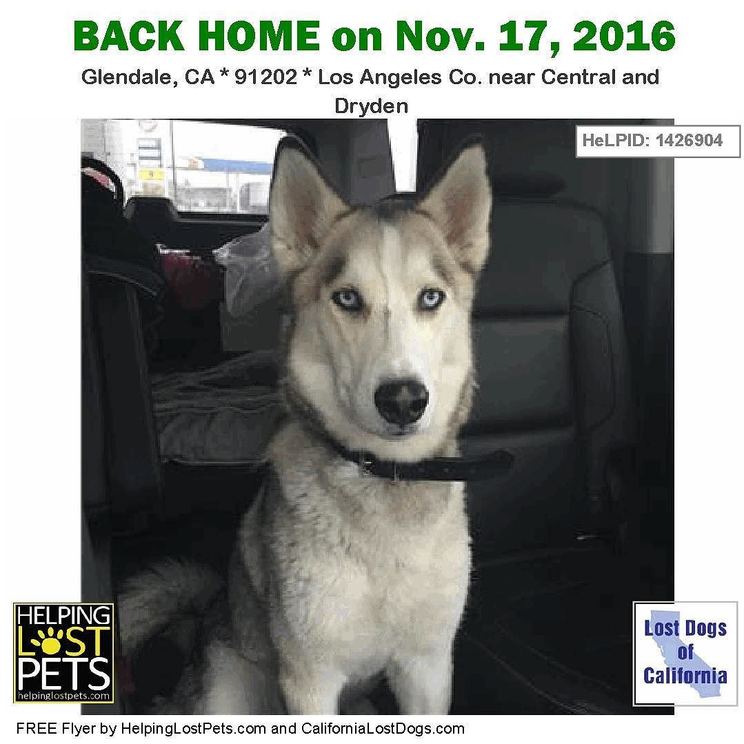 Backhome Jekyll Husky From Glendale Ca Has Been Reunited With His Family Lost 11 16 2016 Back Home 11 17 2016 Losing A Dog Losing A Pet Humane Society