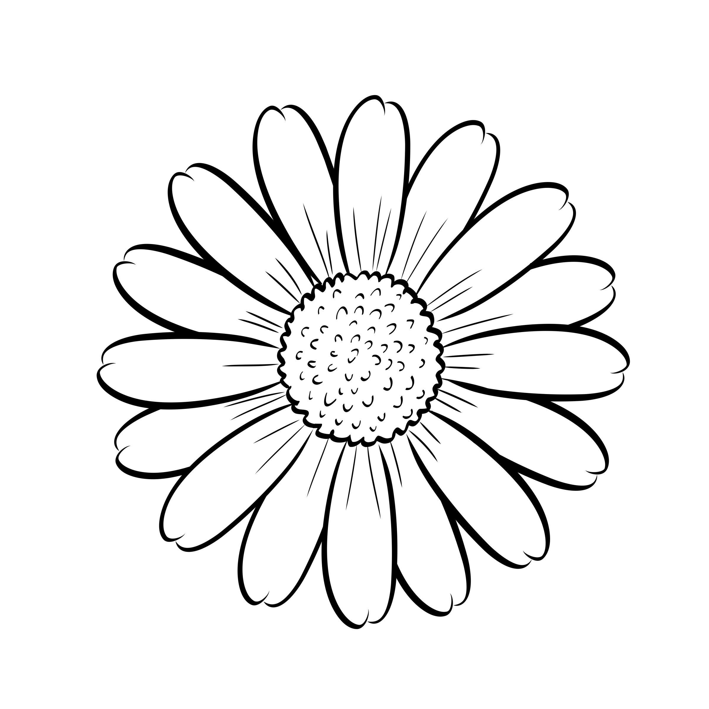 Pin od ela quba na kwiaty pinterest daisy drawing - Coloriage marguerite ...