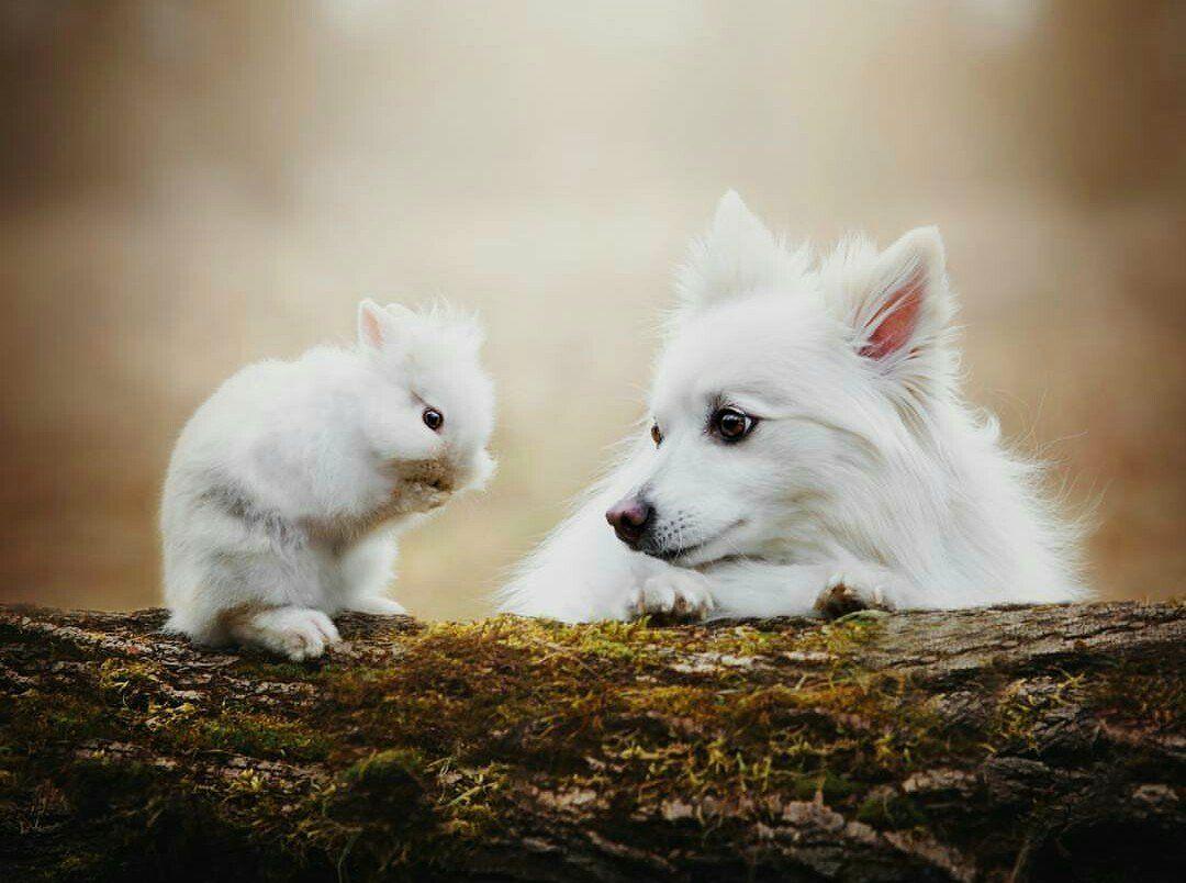 Twitter Cute Animals Animals Friends Animals