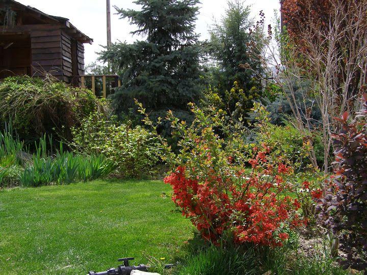 Шарен свят: Градина 2012
