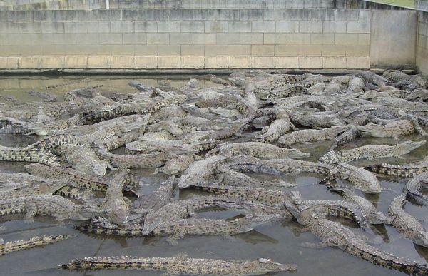 Usted también puede tener un cocodrilo | Blog de Noticias - Yahoo Noticias