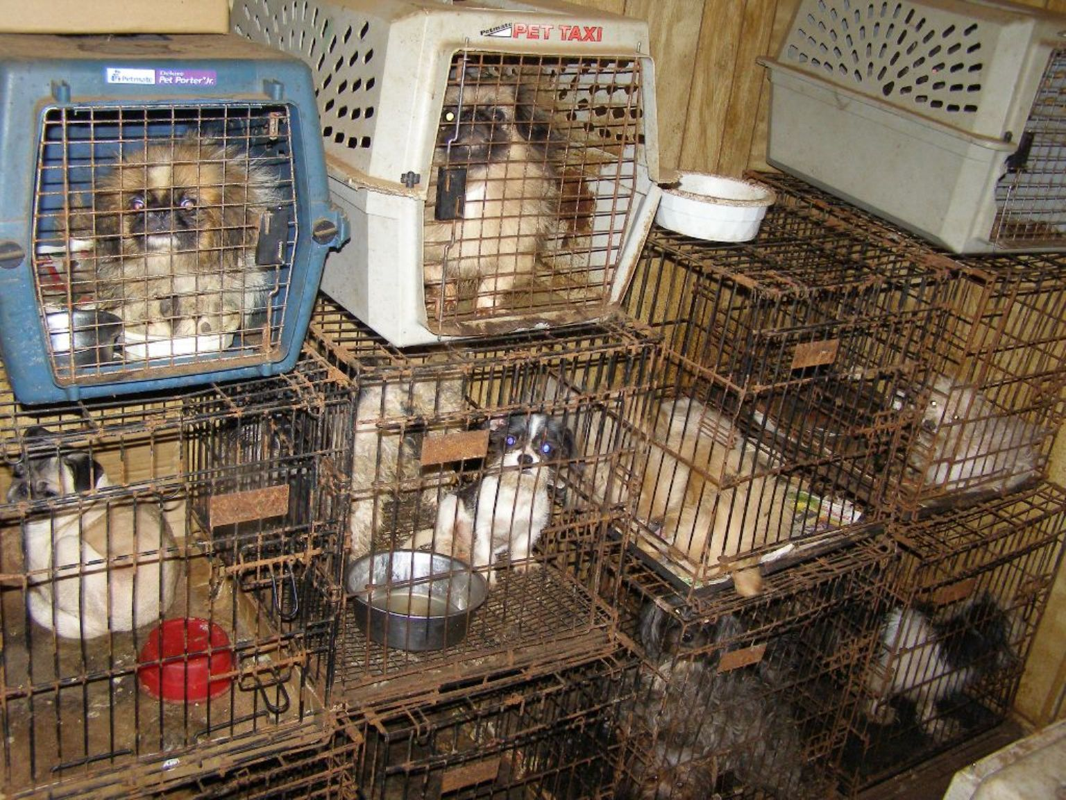 puppy mill cages |     >> Puppy Mill Photos >> WE HAVE TO