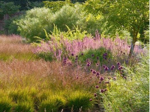 piet oudolf gardens that inspire pinterest