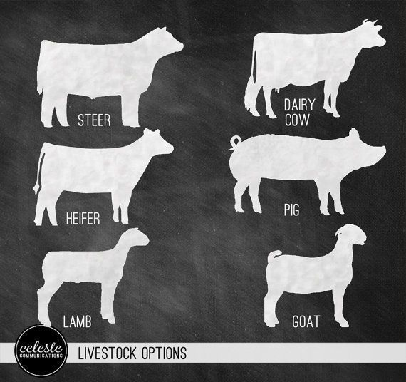 Animal Stock Clipart Clipartfest Showing Livestock Livestock Show Cows