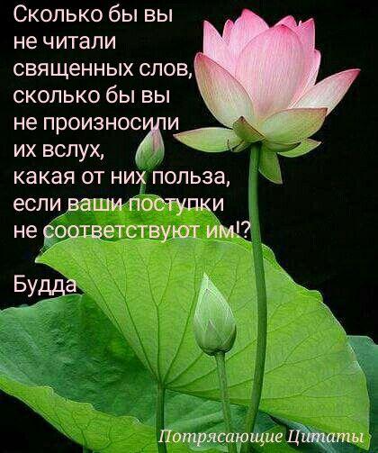 О красоте цветов цитаты