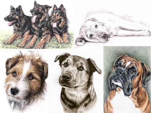 Hundeportraits, dogs portraits, drawn by Nicole Zeug, www.arts-and-dogs.de   Premium Pet Insurance! http://www.petinsurance.1800petsandvets.com
