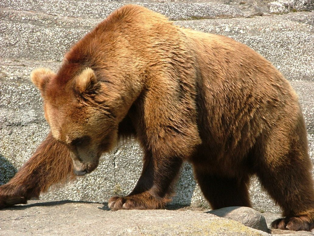 Bear by iskra85 on deviantART