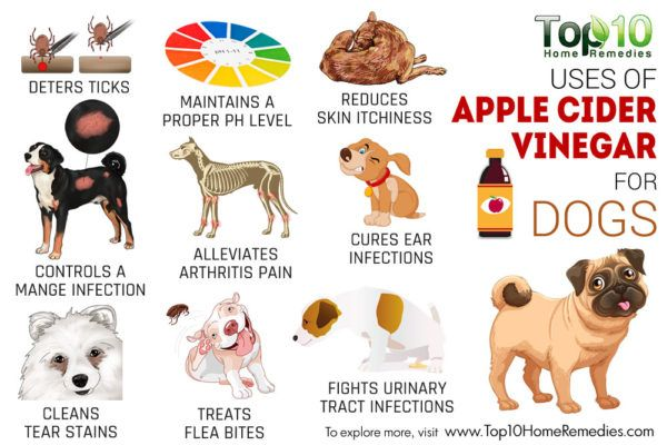 Top 10 Uses Of Apple Cider Vinegar For Dogs Apple Cider Vinegar