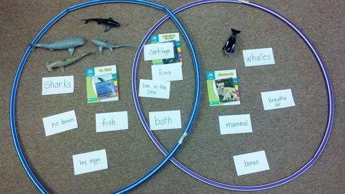 Whales  Dolphins Vs Fish  Shark Venn Diagram