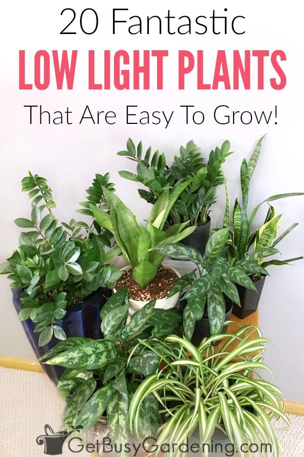 20 Low Light Indoor Plants That Are Easy To Grow Houseplants Garden