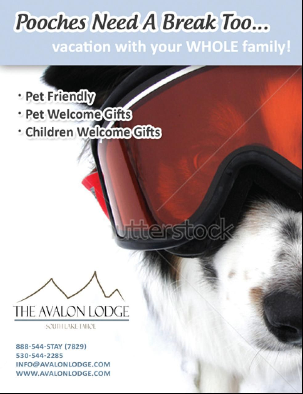 Looking For A Pet Friendly Hotel In South Lake Tahoe You Found It We Accept Well Behave Pet Of All Size South Lake Tahoe Pet Friendly Hotels Lakeside Beach