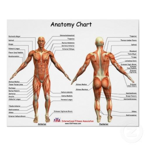 Anatomy Muscle Chart For Children Website Of Health Resources For
