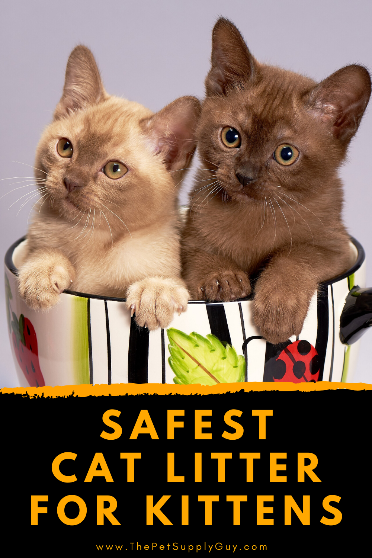 Kitten Safe Litter In 2020 Cat Facts Fun Facts About Cats Cat Behavior