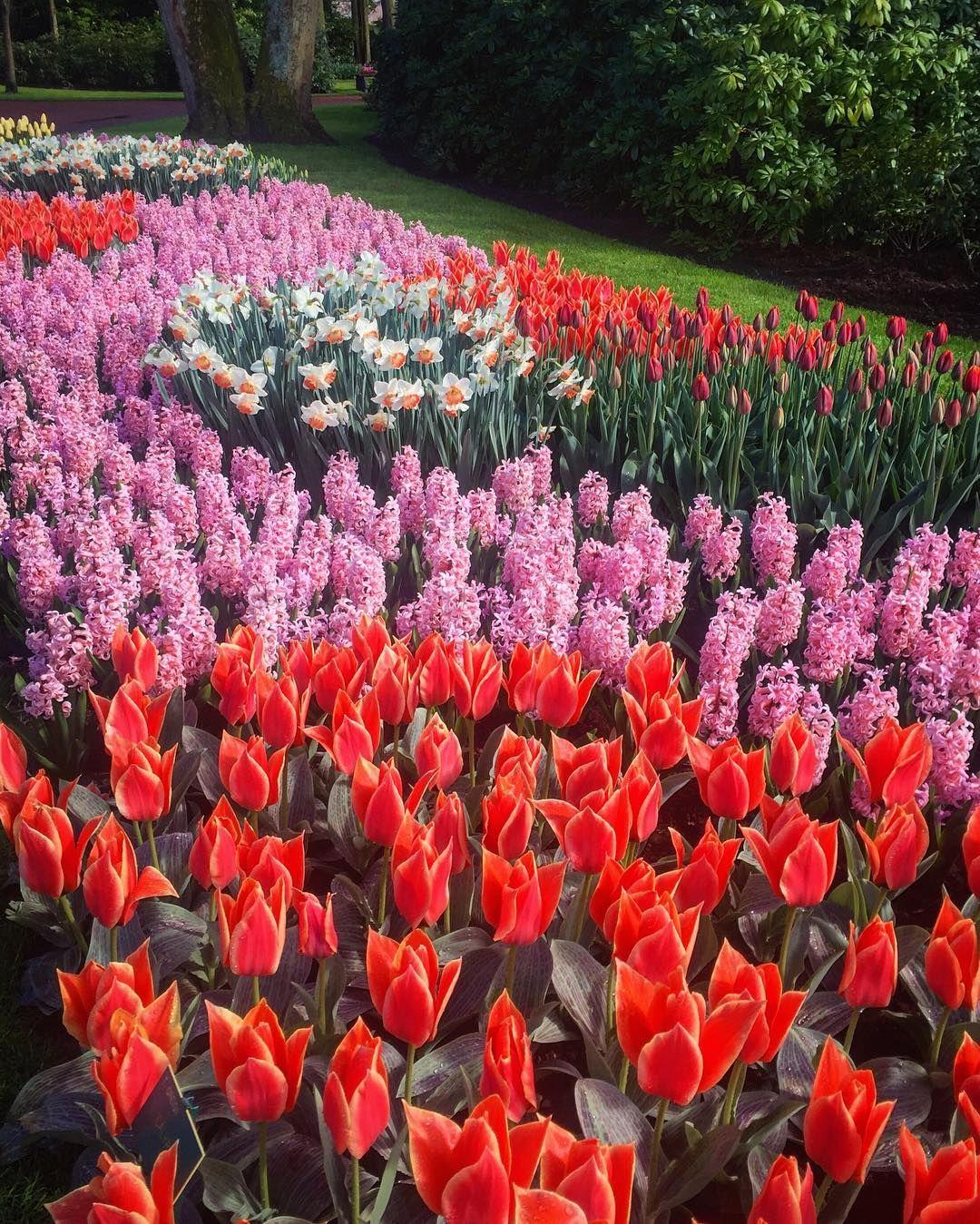 take me back to paradise by shaejells - Tulip Garden Near Me